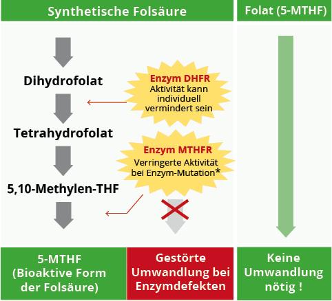 Vergleich Folsäure Folat